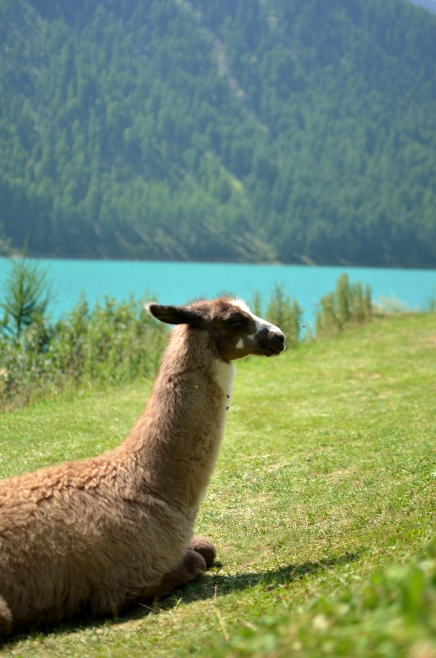 Lago di Vernago - Val Senales - Alto Adige - Italia
